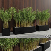 대나무 식물 (Fargesia Murielae) 3d model