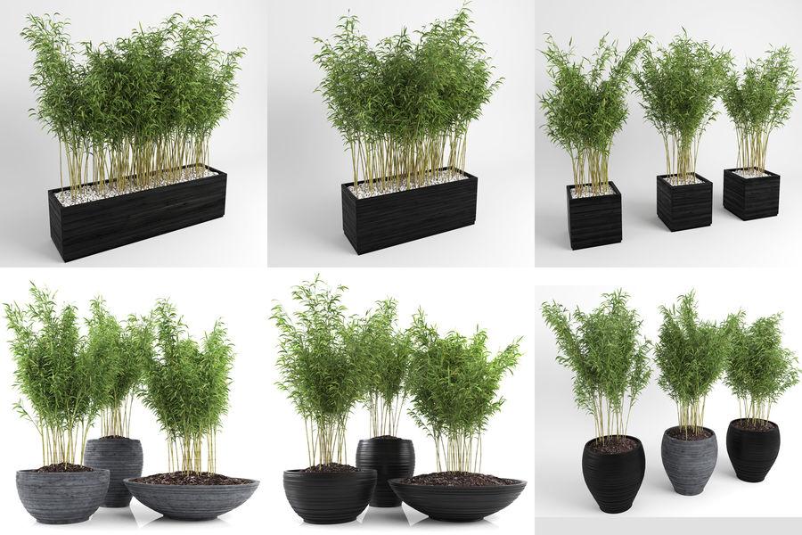 Bambúes paraguas (+ GrowFX) royalty-free modelo 3d - Preview no. 2