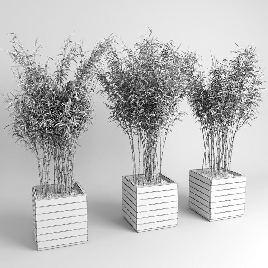 Plantas de bambú (Fargesia Murielae) royalty-free modelo 3d - Preview no. 12