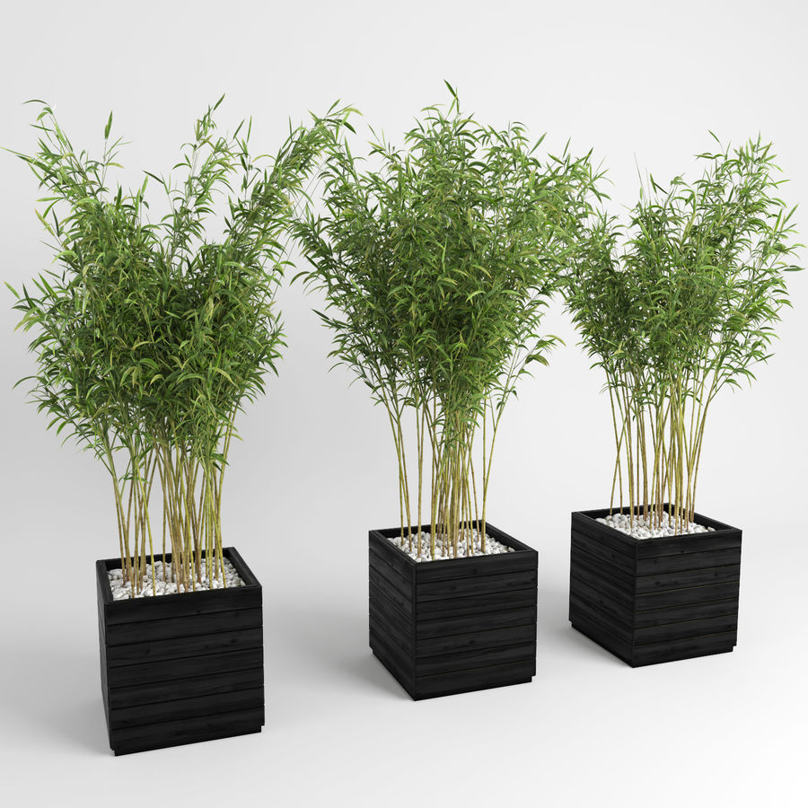 Plantas de bambú (Fargesia Murielae) royalty-free modelo 3d - Preview no. 6