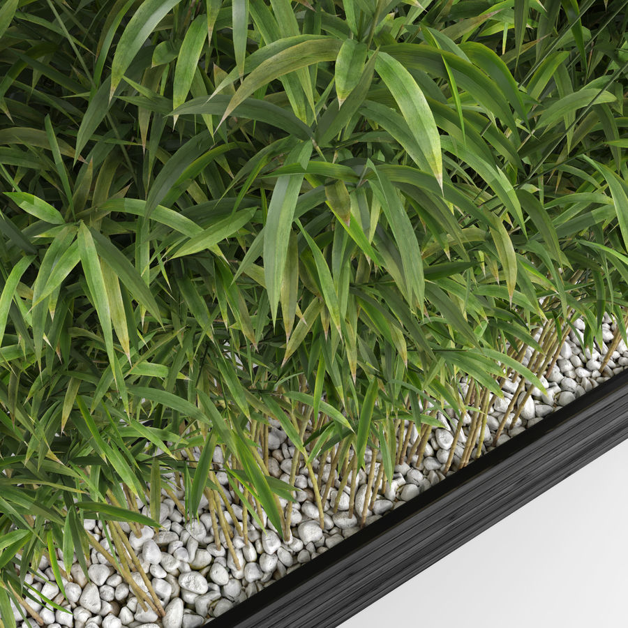 Plantas de bambú (Fargesia Murielae) royalty-free modelo 3d - Preview no. 8