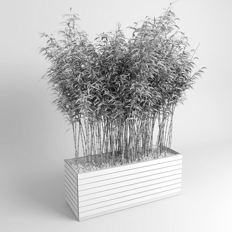 Plantas de bambú (Fargesia Murielae) royalty-free modelo 3d - Preview no. 11