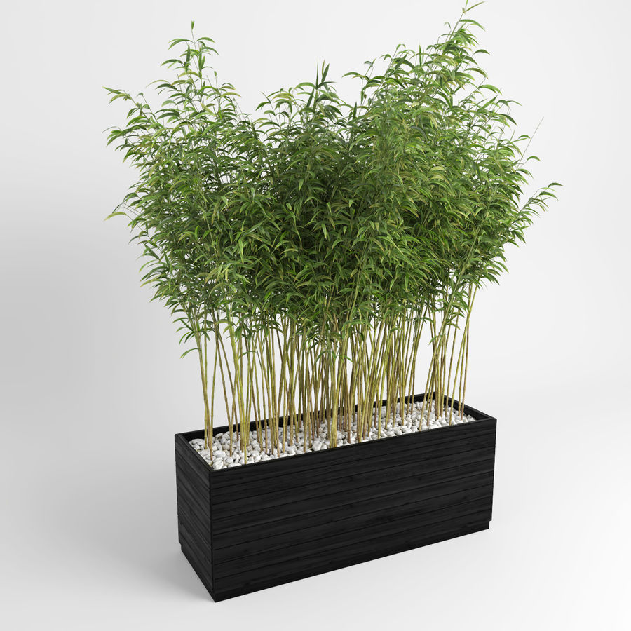 Bambúes paraguas (+ GrowFX) royalty-free modelo 3d - Preview no. 4