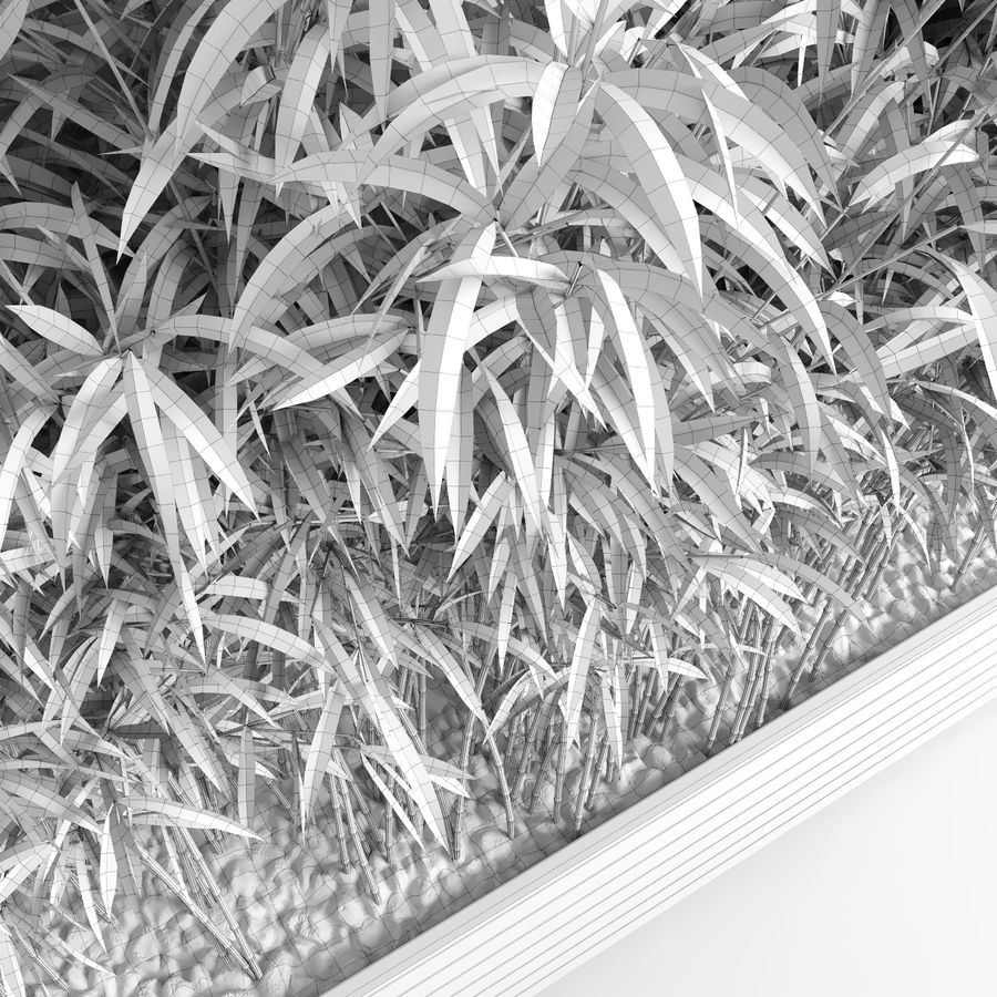 Plantas de bambú (Fargesia Murielae) royalty-free modelo 3d - Preview no. 13