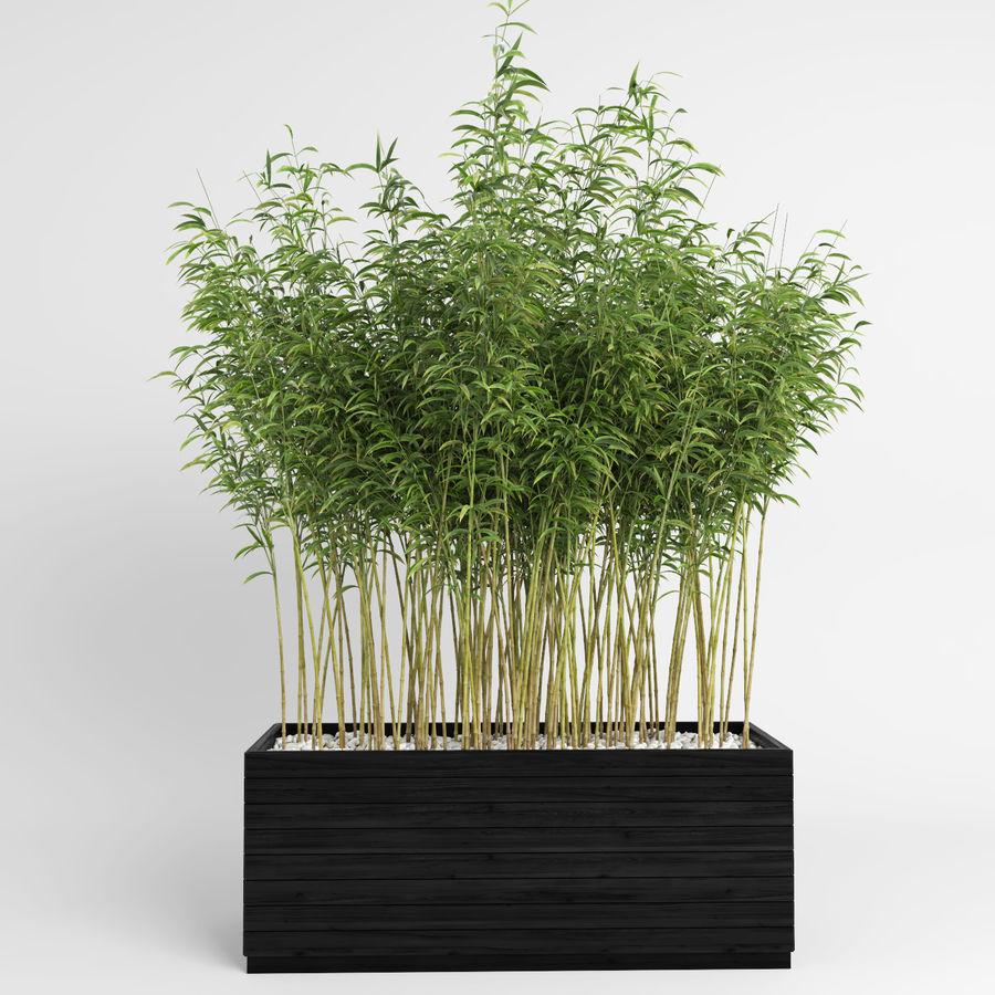 Plantas de bambú (Fargesia Murielae) royalty-free modelo 3d - Preview no. 5