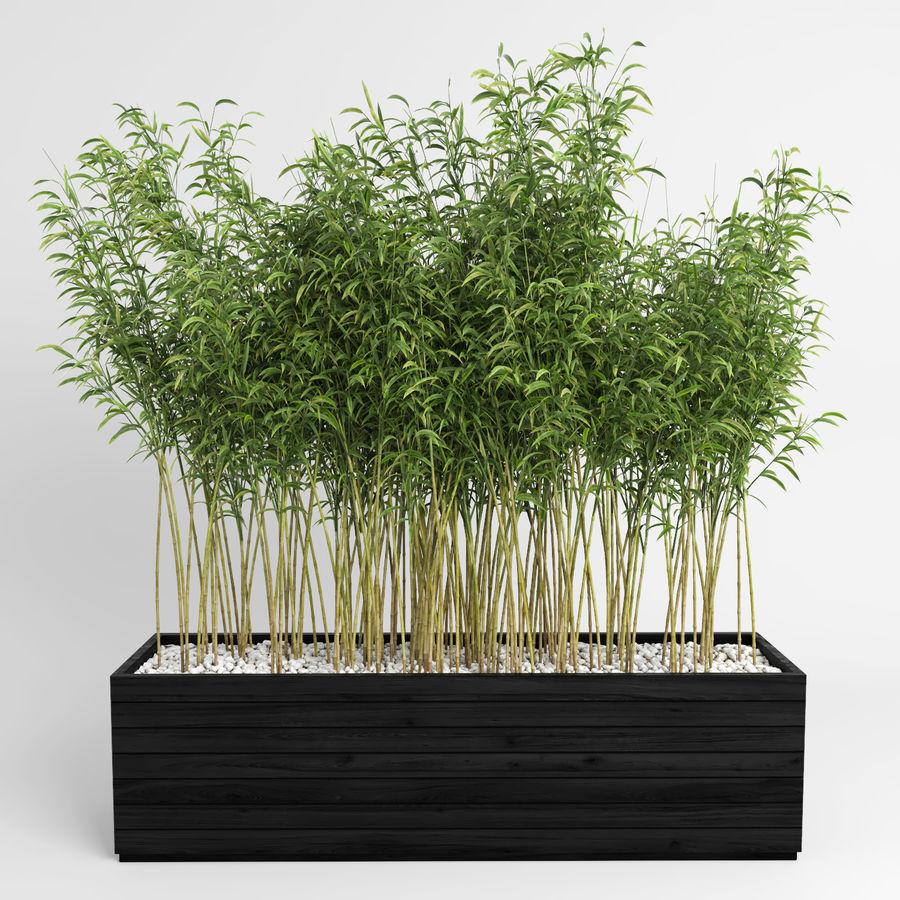 Plantas de bambú (Fargesia Murielae) royalty-free modelo 3d - Preview no. 3
