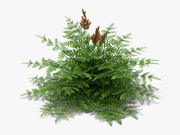 Purple Royal Fern (218) 3d model