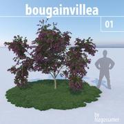 Bougainvillea 1 3d model