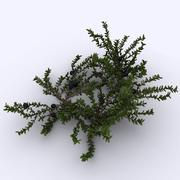 Crowberry 3d model