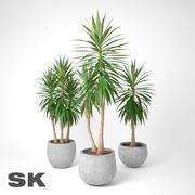 Yucca Elephantipes A + B + C 3d model