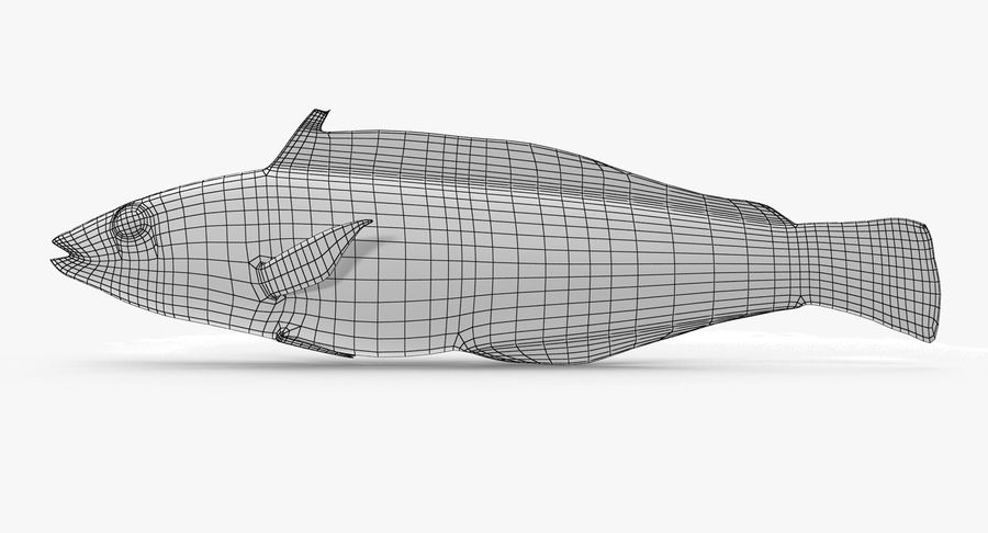 Rainbow Wrasse royalty-free 3d model - Preview no. 8