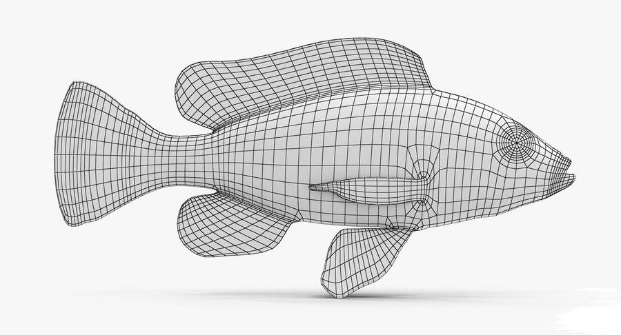 Haplochromis Sauvagei Cichlid royalty-free 3d model - Preview no. 9