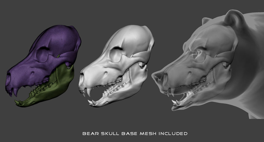 Malha base urso Grizzly royalty-free 3d model - Preview no. 6