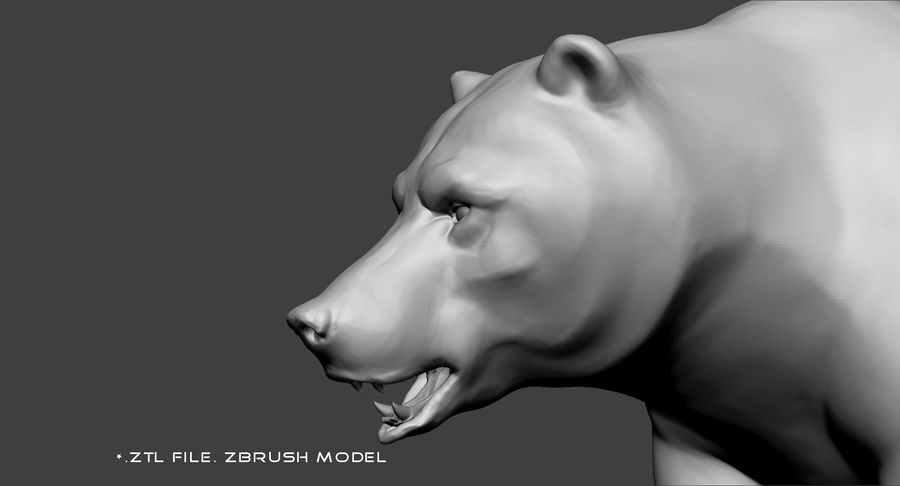 Malha base urso Grizzly royalty-free 3d model - Preview no. 11