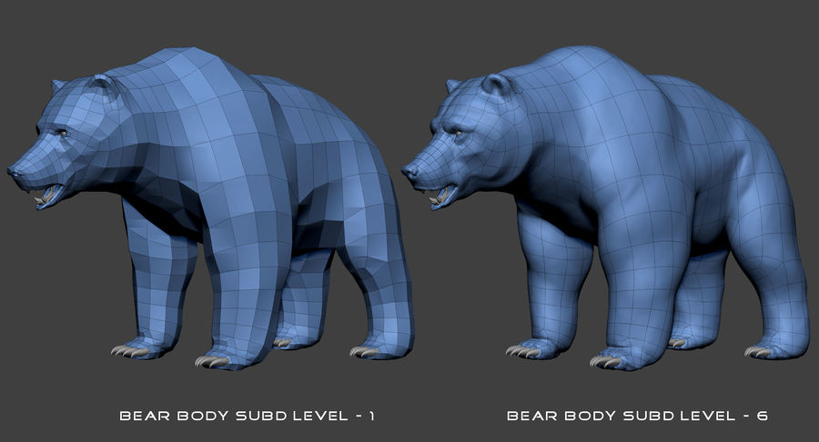 Malha base urso Grizzly royalty-free 3d model - Preview no. 13