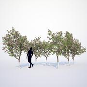 Kolekcja kwitnących jabłoni 3d model