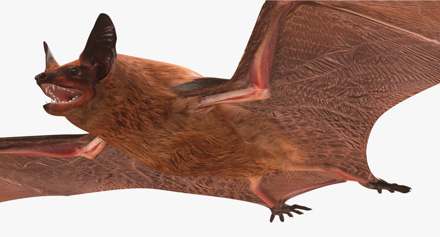 Bat royalty-free 3d model - Preview no. 10