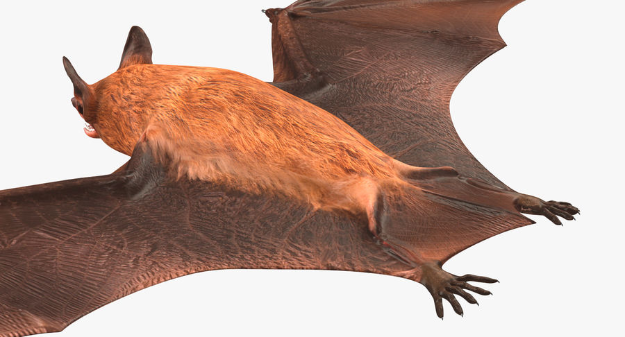 Bat royalty-free 3d model - Preview no. 12