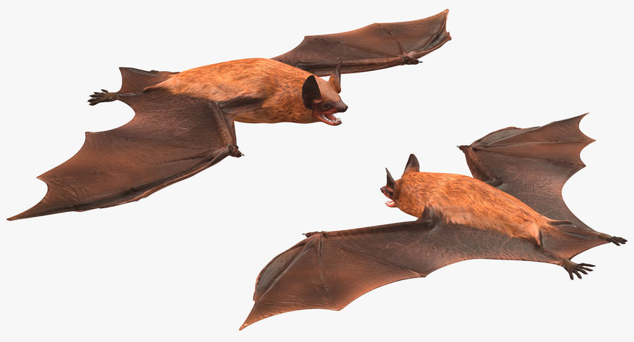 Bat royalty-free 3d model - Preview no. 5