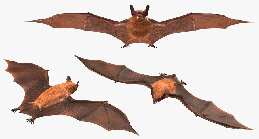 Bat royalty-free 3d model - Preview no. 6