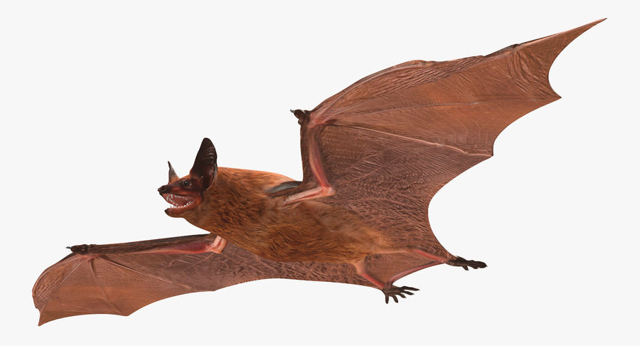 Bat royalty-free 3d model - Preview no. 3