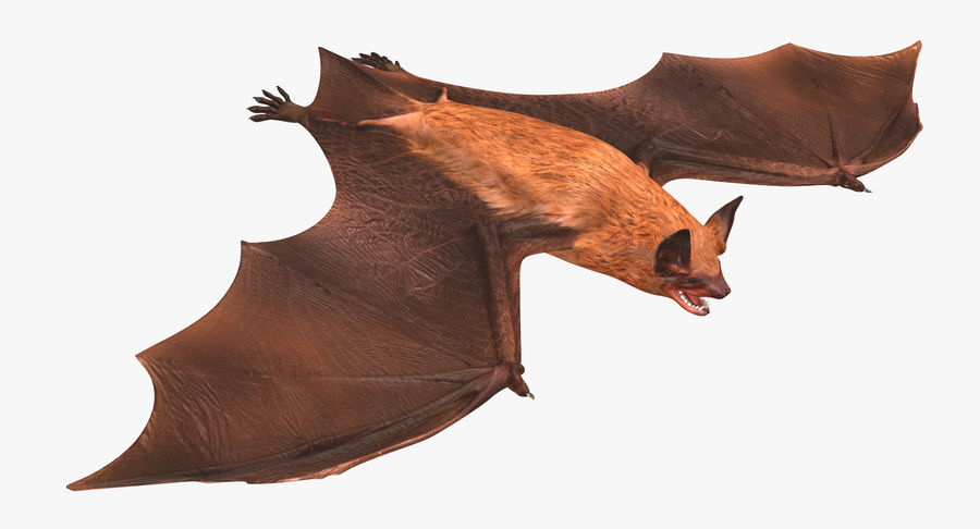 Bat royalty-free 3d model - Preview no. 9