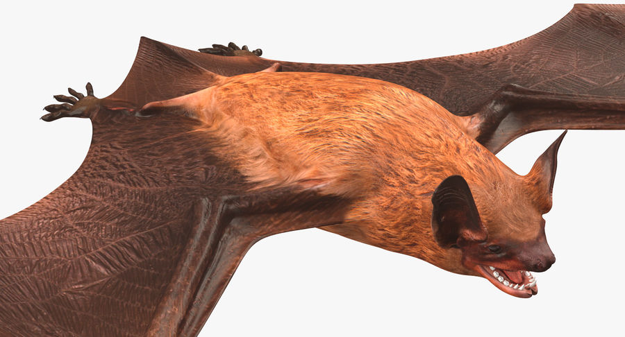 Bat royalty-free 3d model - Preview no. 11