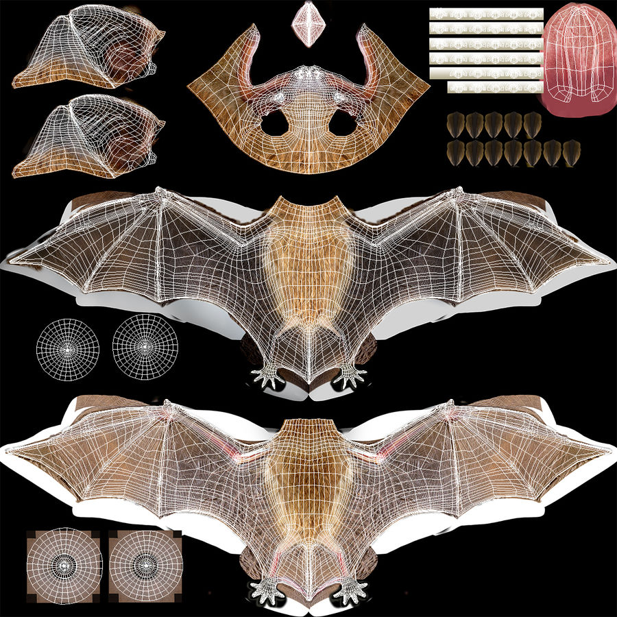 Bat royalty-free 3d model - Preview no. 18