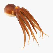 Gemeenschappelijke Octopus zwemmen 3d model
