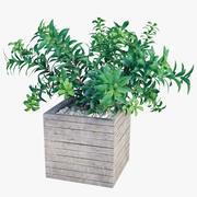 植物树01 3d model