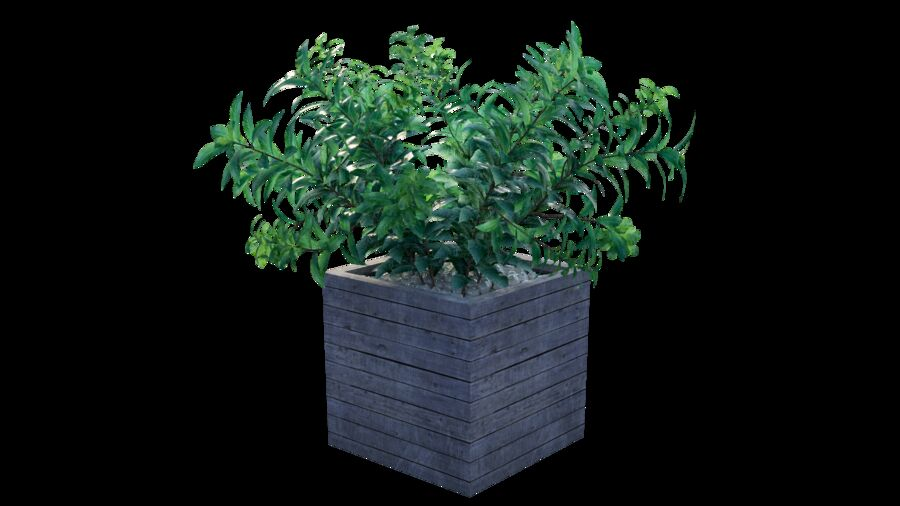 Plant tree 01 royalty-free 3d model - Preview no. 5