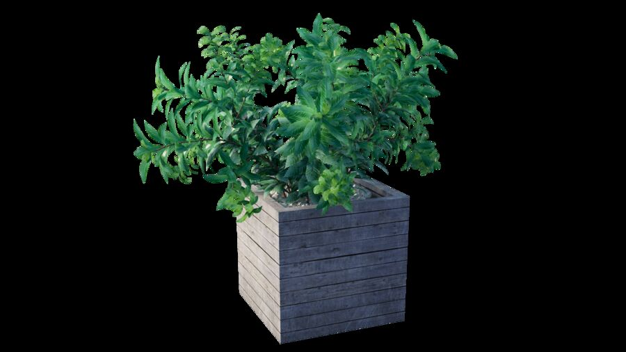 Plant tree 01 royalty-free 3d model - Preview no. 7