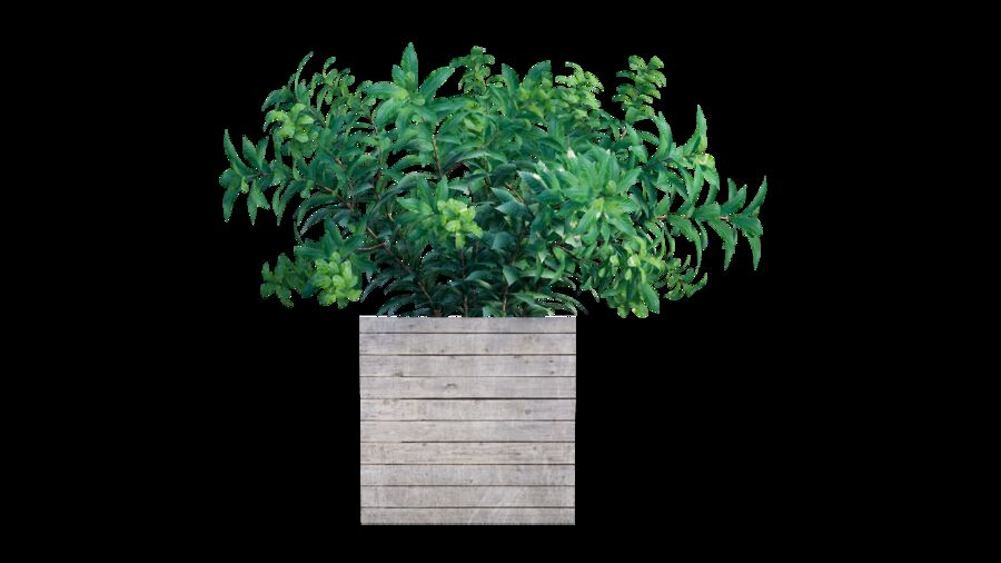 Plant tree 01 royalty-free 3d model - Preview no. 3
