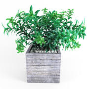Planta árbol 01 modelo 3d