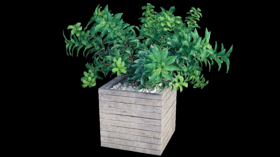 Plant tree 01 royalty-free 3d model - Preview no. 6