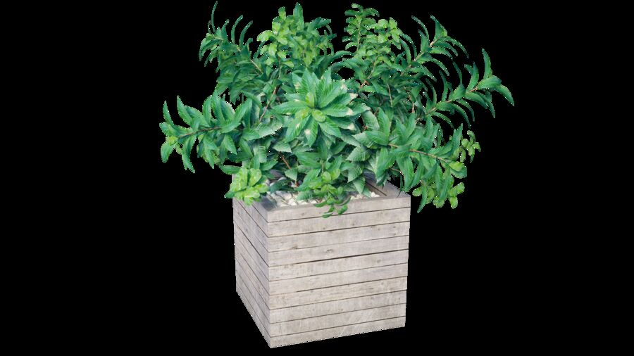 Plant tree 01 royalty-free 3d model - Preview no. 8