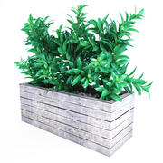 Plant tree 02 3d model