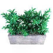 植物树02 3d model