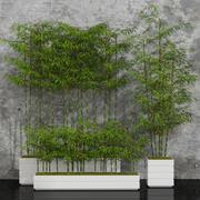 rośliny pokojowe bambus 3d model