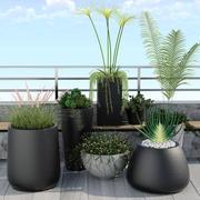 rośliny 12 3d model