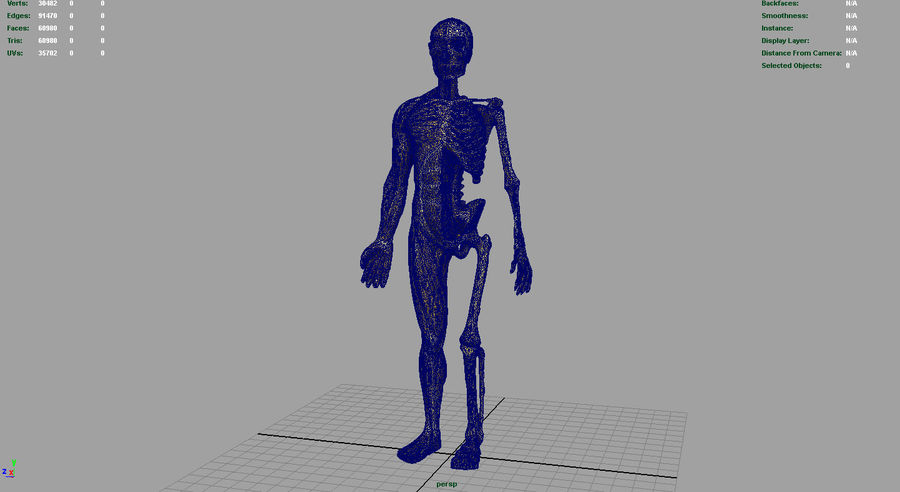 HUMAN BODY ANATOMY MODEL royalty-free 3d model - Preview no. 11