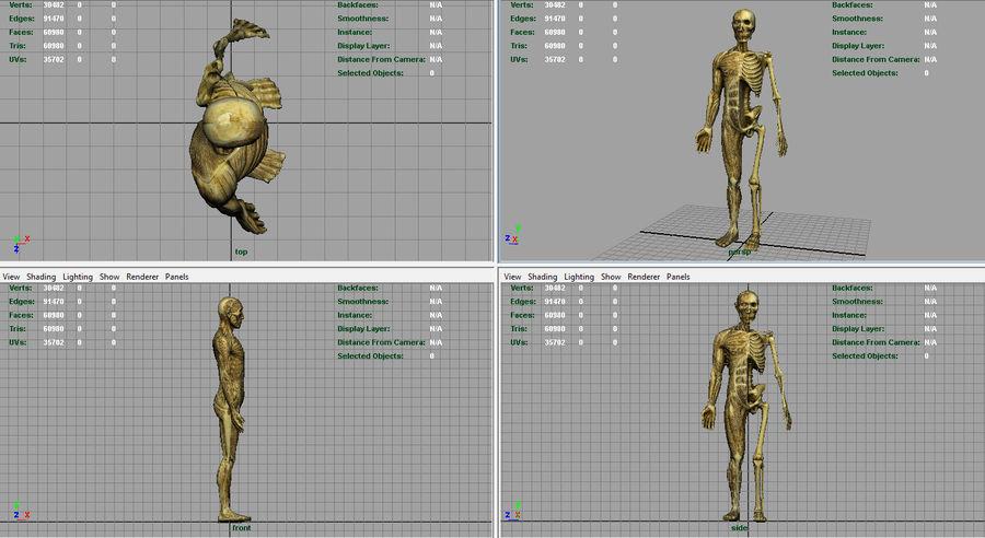 HUMAN BODY ANATOMY MODEL royalty-free 3d model - Preview no. 12