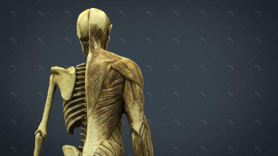 인간 신체 해부학 모델 royalty-free 3d model - Preview no. 7