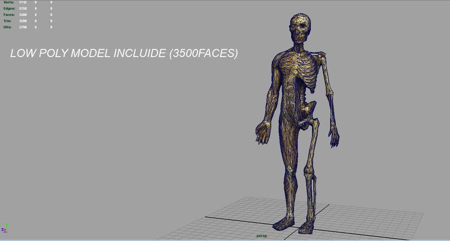 인간 신체 해부학 모델 royalty-free 3d model - Preview no. 17