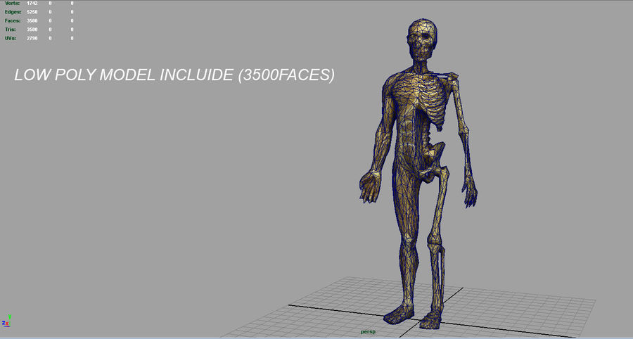 HUMAN BODY ANATOMY MODEL royalty-free 3d model - Preview no. 17