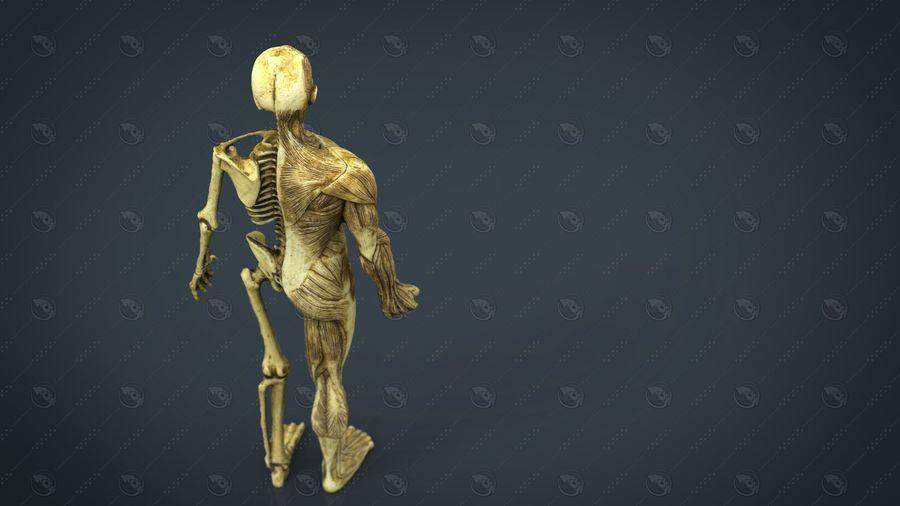 HUMAN BODY ANATOMY MODEL royalty-free 3d model - Preview no. 5