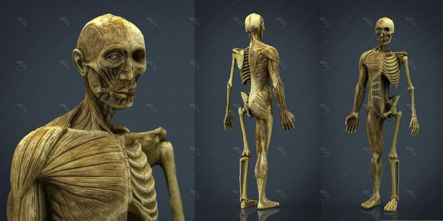 HUMAN BODY ANATOMY MODEL royalty-free 3d model - Preview no. 1