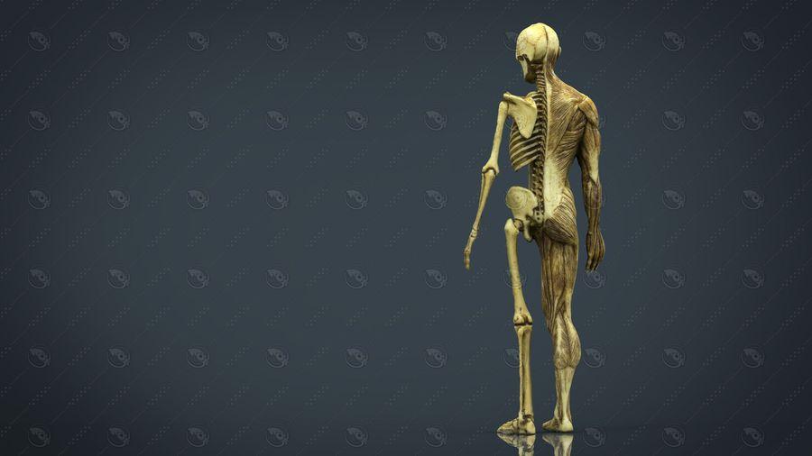 인간 신체 해부학 모델 royalty-free 3d model - Preview no. 6