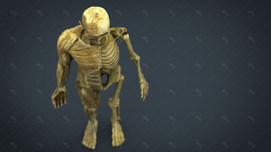 HUMAN BODY ANATOMY MODEL royalty-free 3d model - Preview no. 4