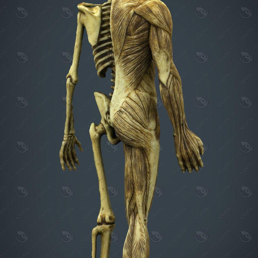 HUMAN BODY ANATOMY MODEL royalty-free 3d model - Preview no. 2